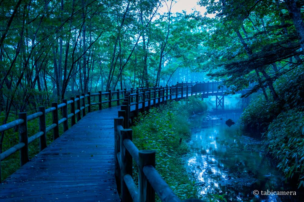 上高地 大正池の木道