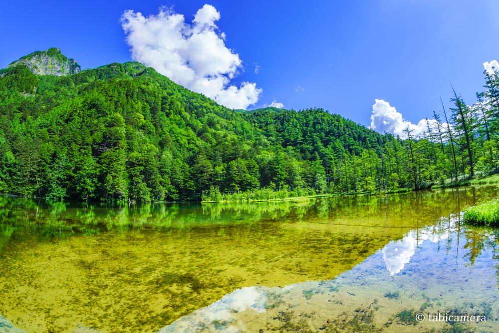 上高地の明神池