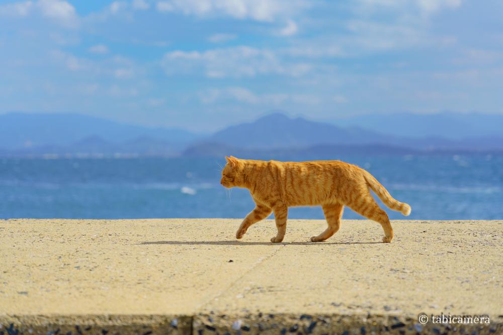 猫島 相島 猫 福岡