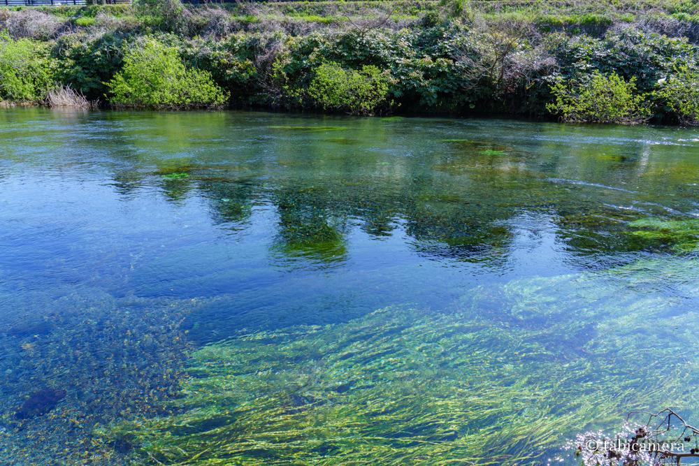 静岡県日本一短い一級河川柿田川