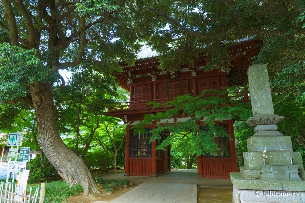松戸本土寺の門