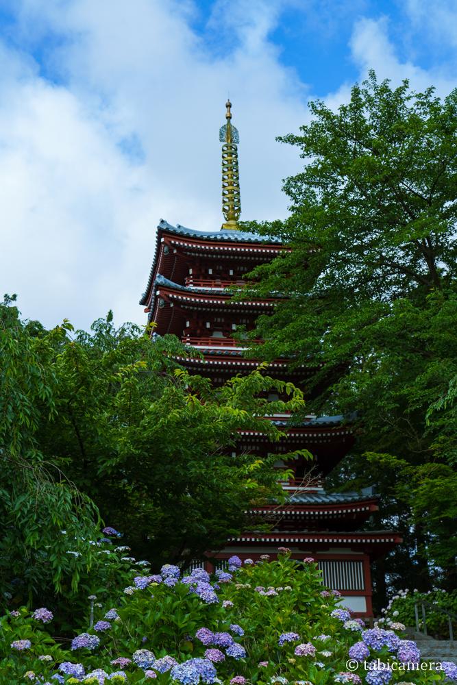 松戸本土寺の五重塔と紫陽花
