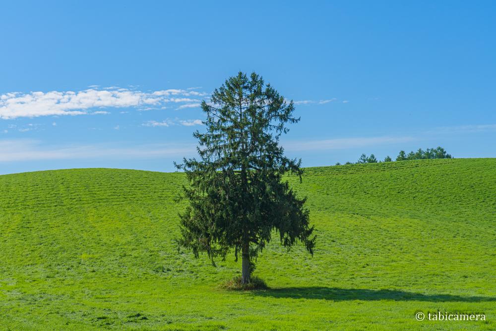 富良野の畑