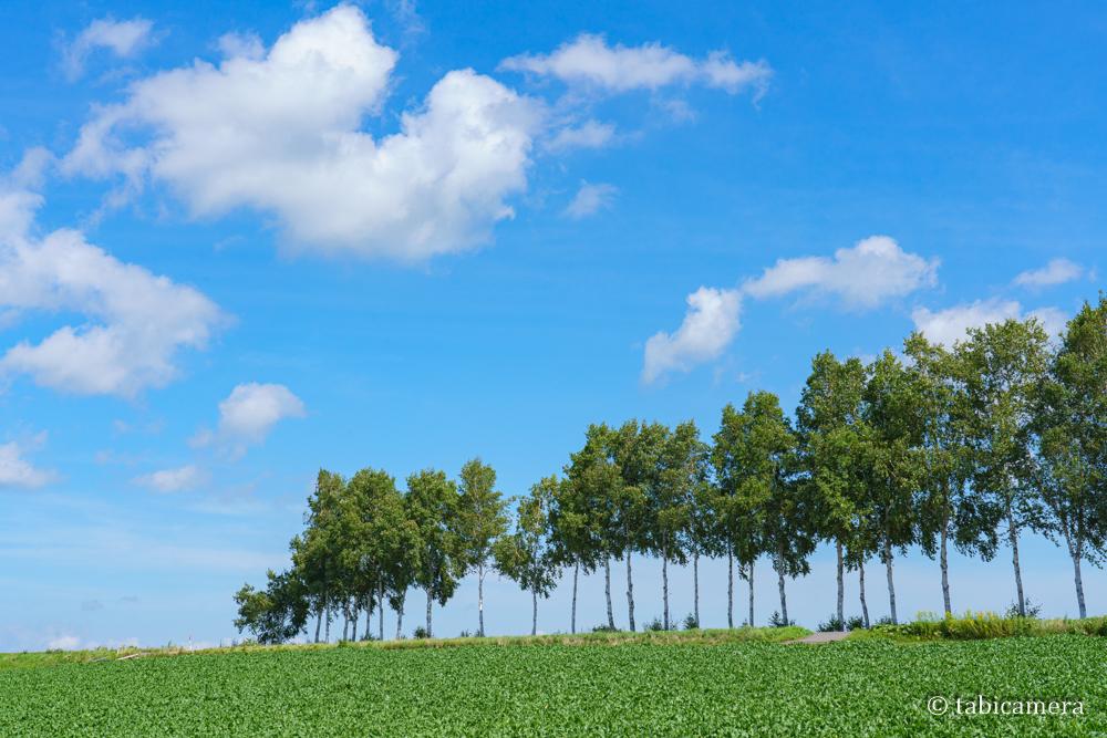 セブンスターの木の近くの並木