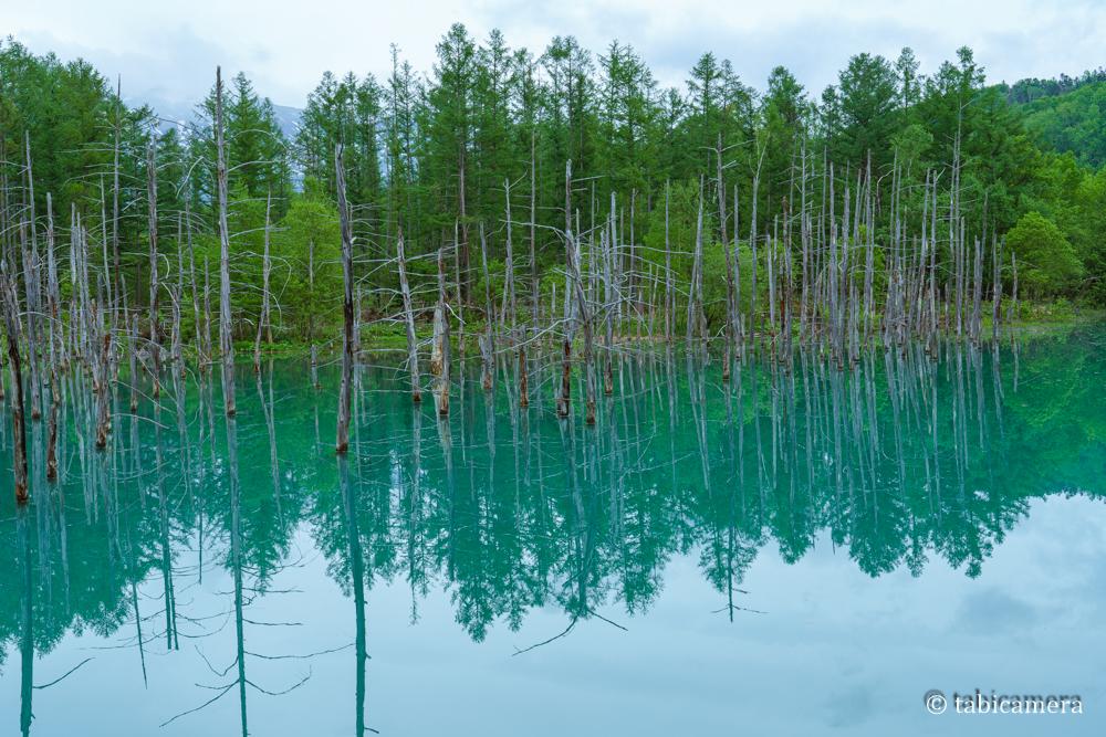 曇りの青い池は緑