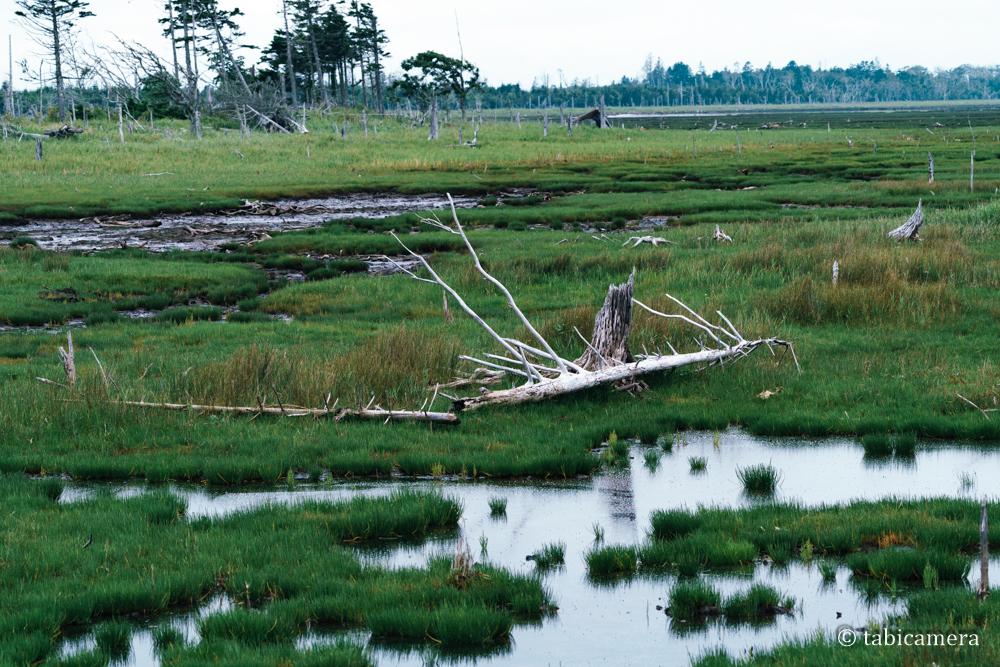 根室春国岱の湿地