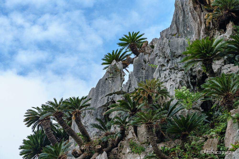 大石林山の悟空岩とソテツ