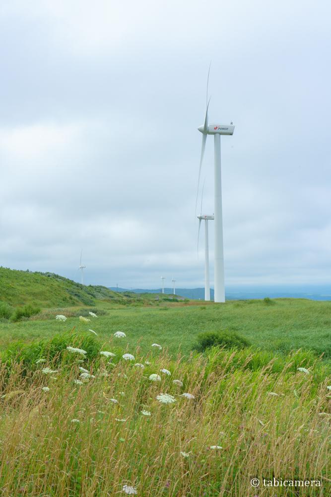 せたな町海岸線の風力発電