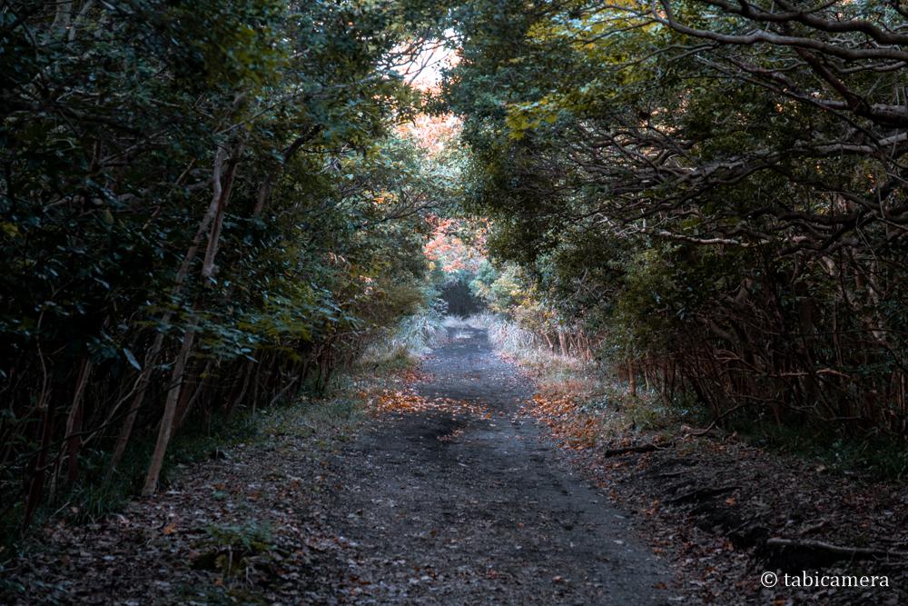 伊豆大島椿並木