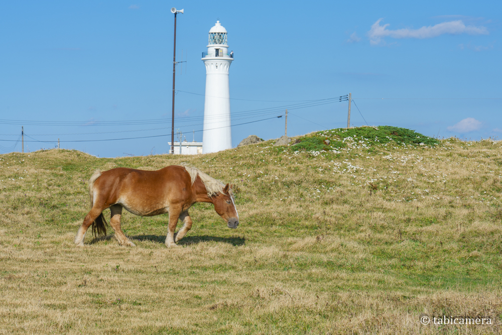 下北半島 尻屋崎の寒立馬と灯台